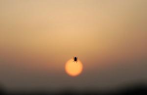 Sonnenuntergang_02