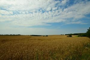 Typische rügensche Landschaft